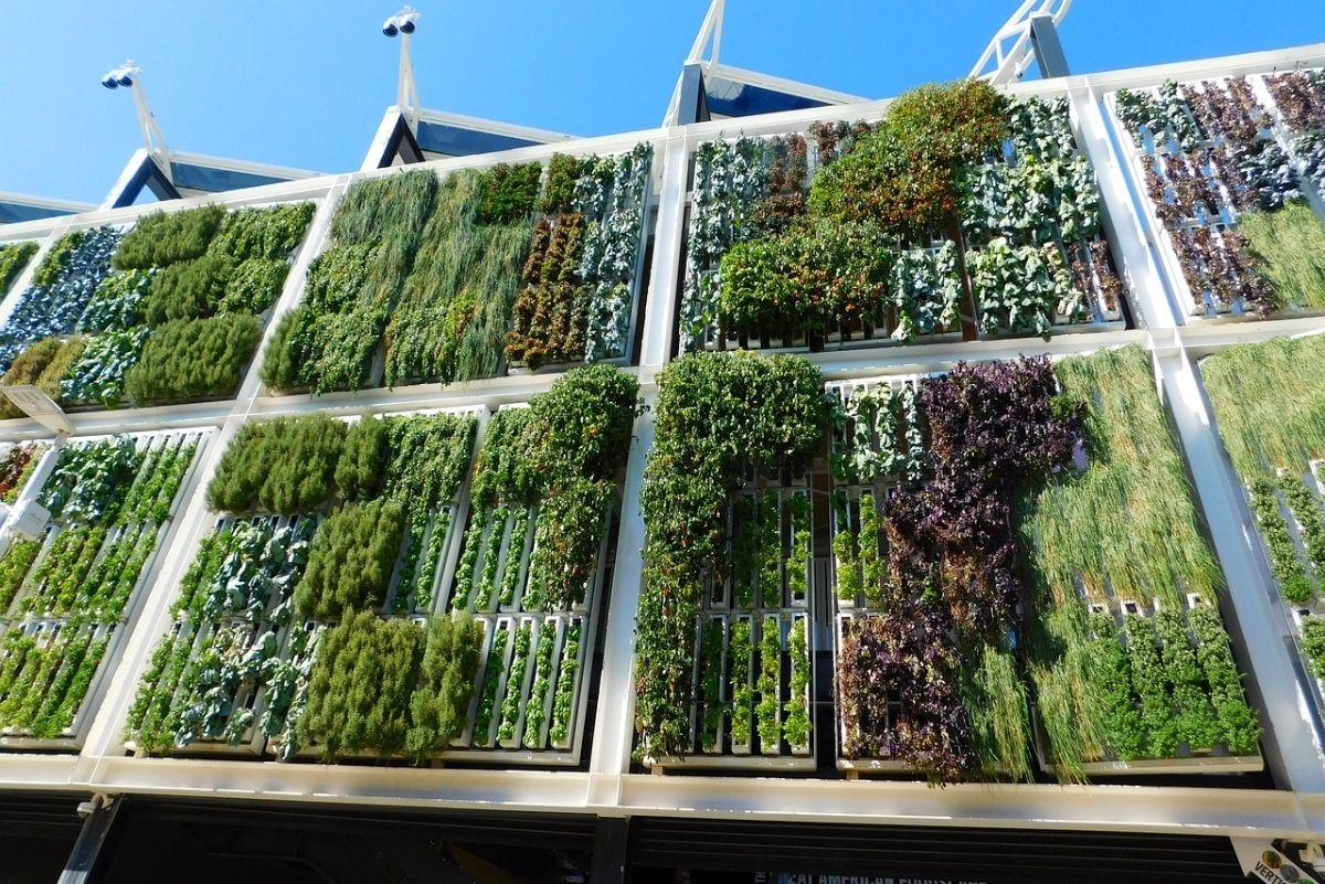 Beneficios de construir jardines verticales