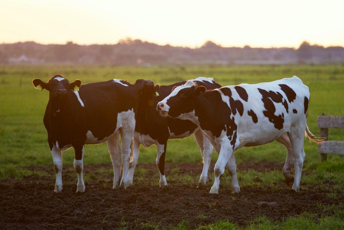 Descubrimiento mexicano que revolucionará la ganadería